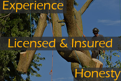 Experience, Licensed & Insured, Honesty in orange font on gray boxes over picture of worker of tree companies in Barnegat