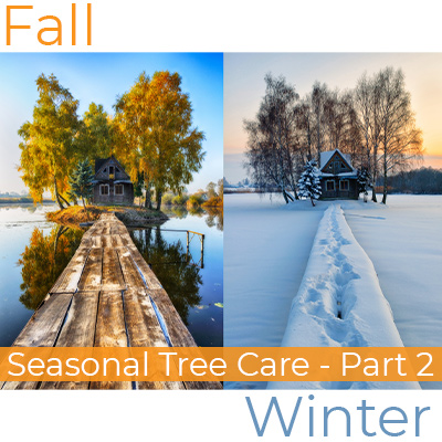Barnegat tree companies; Seasonal Tree Care - Part 2 on orange banner in white font on bottom of picture of a shack during fall and winter surrounded by trees