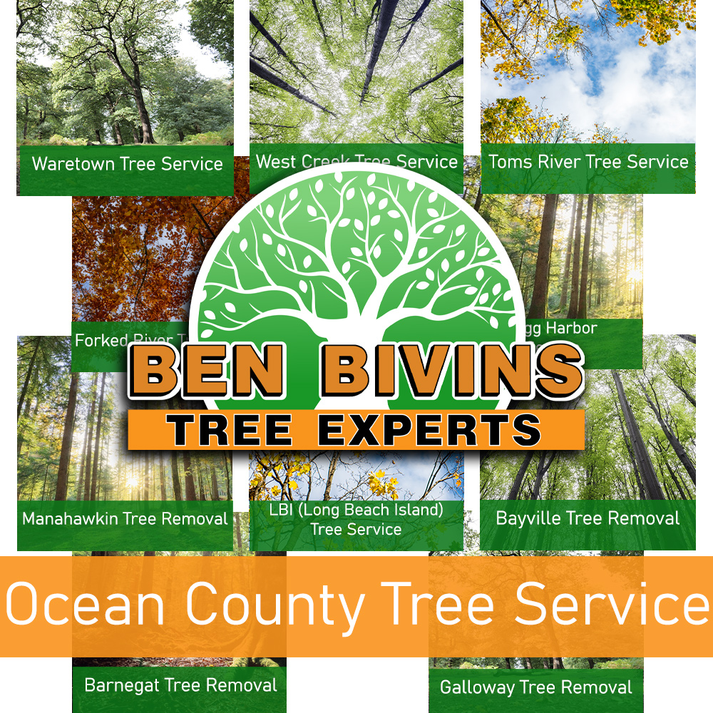 Ocean County Tree Service in white font in orange box on top of collage of picutres with town names. Large Ben Bivins Tree Experts logo in the middle of the picture