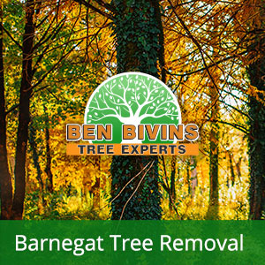 Fall trees with text that says Barnegat Tree Removal